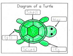 Nonfiction Writing {Turtles}, great activities on blog too!!