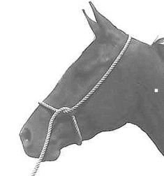 Horseman Tips-Think Like a Horse-Rick Gore Horsemanship