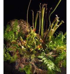 Homage to the Curious by Lila B....posted by the 2014 San Francisco Flower & Garden Show