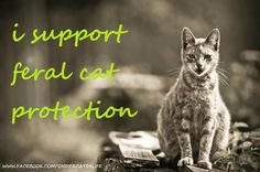 There are programs that will pay for feral cats' spays and neuters if you need help with that. Animals deserve peace and respect. Crazy Cat Lady, Crazy Cats, Feral Cats, Animal Rights, Beautiful Cats, Cats And Kittens, Cats Meowing, Cats Bus, Animal Rescue
