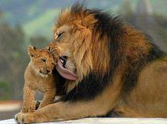 El amor entre los padres y su descendencia no es sólo cosa de nosotros