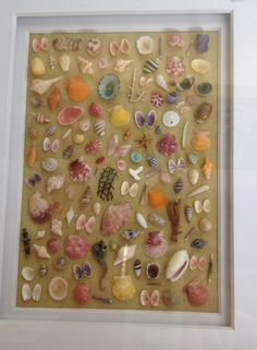 Shell collection art