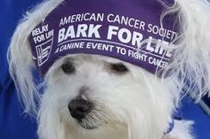 Bark For Life The Run was held here at Dawgs in Motion