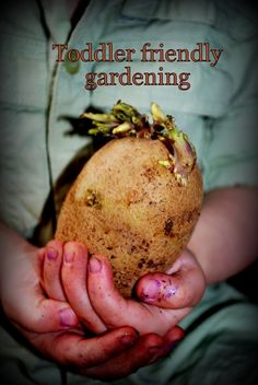 tips for planting your toddler's first garden (potatoes) or for beginners