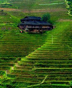 Banaue Rice Terraces in Philippines - Rice plantation