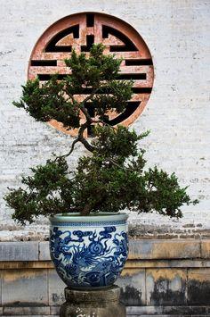 Little Bonsai,  Hue, Vietnam