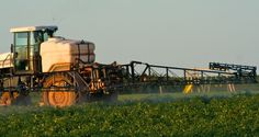 School children placed at risk by approval of new GMOs and herbicides