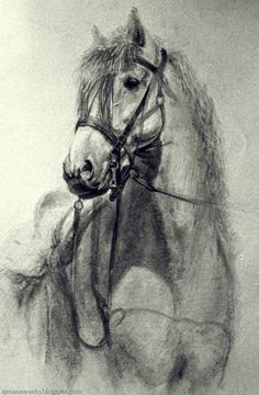 Horse in Charcoal. by Manzanedo