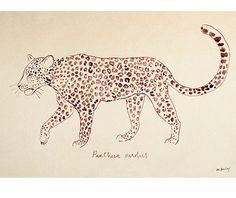 Panthera pardus, Leopard illustration, ink on paper. Print