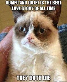 Grumpy cat, grumpy cat meme, grumpy cat humor, grumpy cat quotes, grumpy cat funny …For the best humour and hilarious jokes visit cat Memes Humor, Cat Memes, Funny Memes, Funny Quotes, Hilarious Jokes, It's Funny, Funniest Quotes, Funny Videos, Humor Quotes