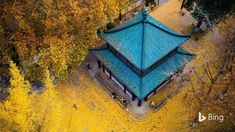 As autumn takes hold in China, a blanket of fan-shaped golden leaves—like this one at Xuanwu Lake Park in Nanjing—becomes a familiar si...