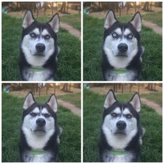 """XO on Twitter: """"So I pretended to throw a ball and caught the exact moment my dog realised I had betrayed him..."""""""