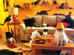 Cathy Queen of Cats House-full-of-cats.jpg (250×188)