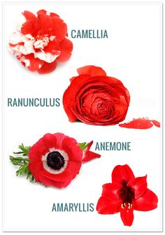 This list reflects a small portion of the flowers that are in season for December through February.
