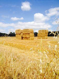 Harvest at Ballymaloe County Cork, Monument Valley, Harvest, Ireland, Nature, Summer, Travel, Inspiration, Biblical Inspiration