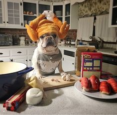 """Happy Thanksgiving!""... ""now get this hat OFF me, and give me some Turkey!"", Funny French Bulldog who's hungry after posing for silly T-Day photos ; ) #Buldog"