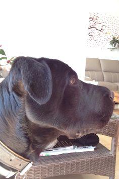 Shar pei mix I'm a good looking dog !!!
