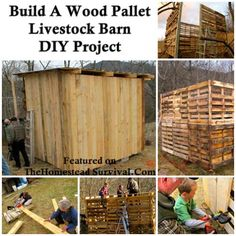 The Homestead Survival   The Building of a Wood Pallet Goat Barn DIY Project   http://thehomesteadsurvival.com