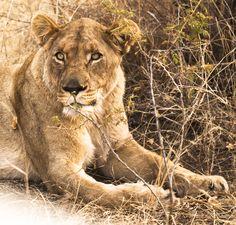 "See 8 photos and 2 tips from 29 visitors to Rhulani Safari Lodge. ""The Eland steak is Amazing"" Safari, Eyes, Animals, Africa, Animales, Animaux, Animal, Animais, Cat Eyes"