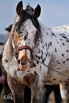 Great markings and color!