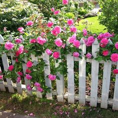 Roses and a picket fence.Mod Vintage Life: Evening in the Back Yard Picket Fence Garden, Garden Gates, Fence Design, Garden Design, Backyard Hill Landscaping, Beautiful Scenery Pictures, Fragrant Roses, Pink Milk, Pots