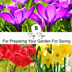 5 Tips To Prepare Your Garden For Spring Tefal Actifry, Weird Pictures, Winter House, Garden Crafts, Things To Buy, Gardening Tips, Outdoor Gardens, Entertaining, Lilacs
