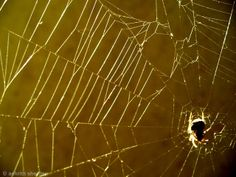 Incy WInci Spider