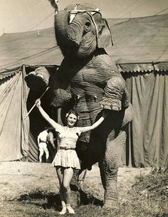 Circus Performer and Elephant training before Show.  please stop the abuse of circus animals by boycotting current circuses that use animals in their acts