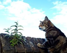 #look out #cat