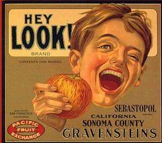 Sebastopol, California Hey Look Little Boy Apple Crate Label Art Print