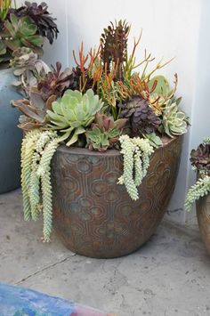 Trendy large succulent planter yards ideas – Famous Last Words Succulents In Containers, Cacti And Succulents, Container Plants, Planting Succulents, Container Gardening, Planting Flowers, Indoor Gardening, Cactus Plants, Succulent Landscaping