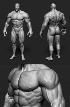 Drawing The Human Figure - Tips For Beginners - Drawing On Demand Zbrush Anatomy, 3d Anatomy, Human Anatomy Drawing, Anatomy Sketches, Anatomy Poses, Muscle Anatomy, Anatomy Study, Anatomy Reference, Drawing Reference