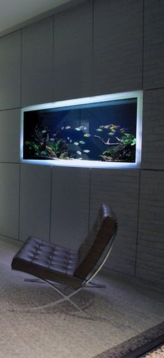 35 Splendid Aquarium Architecture Design Ideas That Suitable For Your Home - In today's economy, it is more important than ever to spend your money wisely, and to invest only in quality products and services guaranteed to withs. Home Aquarium, Aquarium Design, Reef Aquarium, Planted Aquarium, Aquarium Architecture, Architecture Design, Modern Minimalist, Minimalist Design, Minimalist House
