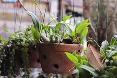 Plants That Need to Be Brought Indoors Need Special Care