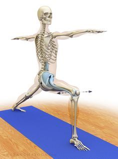 antagonist / synergist combinations in yoga  gluteus