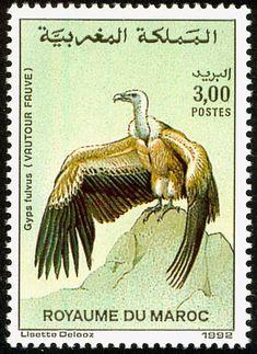 Stamp: Griffon Vulture (Gyps fulvus) (Morocco) (Birds) Mi:MA 1219,Yt:MA 1132