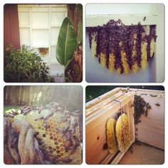 Cut out this beehive from a fence. #beekeeping #bees