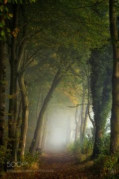 #nature Paradise by ellenborggreve