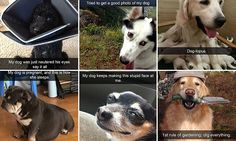 Dog owners capture their bizarre antics in Snapchat posts