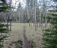 A montane in Bow Valley Provincial Park west of Calgary, Alberta, Canada