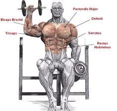 Seated Dumbbell Press Anatomy - Healthy Fitness Shouder Workout - Yeah We Workout ! Best Dumbbell Exercises, Dumbbell Workout, Kettlebell, Gym Workout Tips, Fun Workouts, At Home Workouts, Workout Fitness, Sixpack Workout, Fitness Bodybuilding
