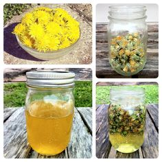 Learn How to Make Dandelion-Infused Oil (So Easy!)