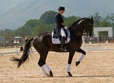 Resultado de imagen para equitacion