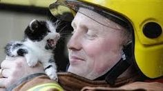 Heroes Saving Beautiful Animal Lives – This Will Touch Your Heart