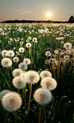 Field full of wishes!