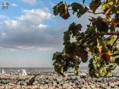 دمشق 17/10/2014
