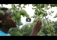 Each year, Chicago's Harvest Youth Farm educates and employs 80-90 teens from low- income communities. These teens learn to grow food responsibly, work as a team, advocate for food justice, eat in a healthy way, and much more. https://www.youtube.com/watch?time_continue=1&v=gaDZg G56zJY