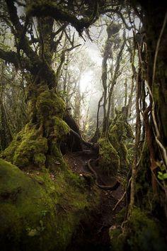 Can I hike here please?