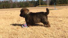 Fluff balls for foster pups!