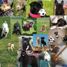 Dogs at Penmellyn Vets Cornwall